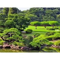 Tablou canvas Parc Japonez